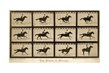 The Horse in Motion  'Animal Locomotion' Series  C1878
