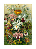 Different Varieties of Orchid  1899