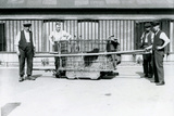 A Black Leopard Being Transported in a Cage by Keepers at London Zoo  June 1922