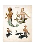 Mermaid  from Encyclopaedia Londinensis  1817