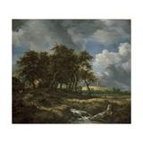 Landscape Near Muiderberg  Early 1650s