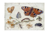 Three Butterflies  a Beetle and Other Insects  with a Cutting of Ragwort  Early 1650S