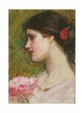 Camellias  C1880