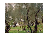 The Olive Grove  C1910
