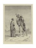 Arab and Camel