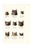 Different Kinds of Bats  1824