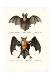 Hollow-Faced Bat  1824
