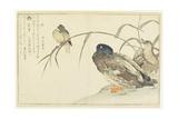 Mallards and a Kingfisher  1790