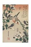 Java Sparrow and Magnolia  C 1832