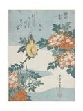 Black-Naped Oriole and China Rose  C 1833