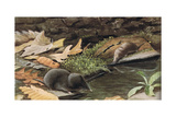 Short Tailed Shrew and Common Shrew