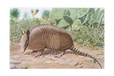 Nine Banded Armadillo  Named for the Overlapping Plates at Midriff