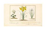 Annemone  Hemerocale and Iris