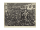 Siberian Mammoth Tusks on the Ivory Floor at the London Docks