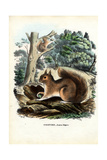Squirrel  1863-79