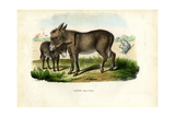 Donkey  1863-79