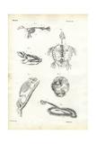 Turtle  1863-79