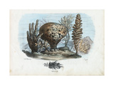 Sponges  1863-79