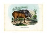 Warthog  1863-79