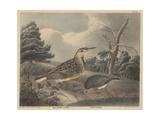 Meadow Lark and Snow Bird