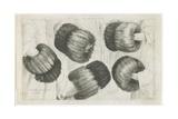A Muff in Five Views  1645-1646
