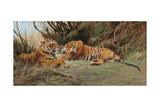 Tigers at Dawn  1913