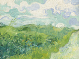 Green Wheat Fields  Auvers  1890