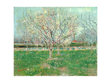 Orchard in Blossom  1880