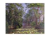 River Cherwell Waterlilies