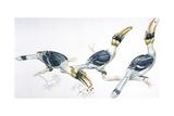 Birds  Coraciiformes  Great Hornbill  (Buceros Bicornis) Feeding