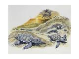 Green Sea Turtle or Pacific Green Turtle (Chelonia Mydas) Hatchlings on Beach  Cheloniidae