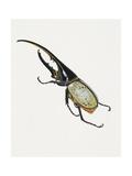 Hercules Beetle (Dynastes Hercules)  Scarabaeidae Artwork by Brin Edward