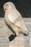Greek Art Statue of Owl Symbol City of Athens Acropolis Museum Greece