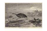 Sketches in Australia  Hunting the Emu