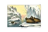 Walrus  1860