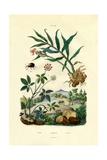 Shiny Spider Beetle  1833-39