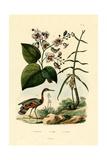 Ginger  1833-39