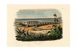 Crocodiles  1833-39