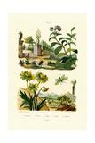 Heliotrope  1833-39