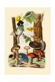 Mushrooms  1833-39