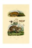 Anteater  1833-39