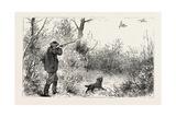 Woodcock Shooting  1884