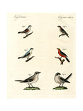 Different Kinds of Shrikes