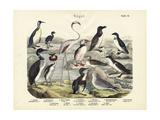 Birds  C1860