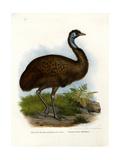 Emu  1864