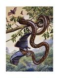 Darwin Carpet Python (Morelia Spilota Variegata)  Pythonidae