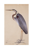 A Heron  C 1820