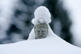 A Buddha Statue Covered in Snow