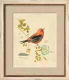 Gilded Songbird 3