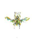 Actaeon Beetle
